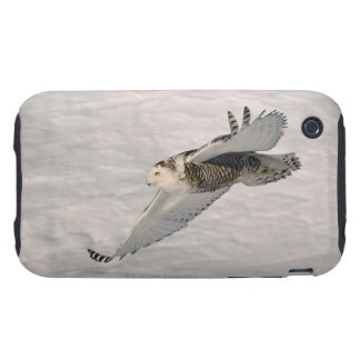 A Snowy owl gliding. iPhone 3 Tough Cases