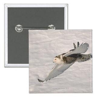 A Snowy owl gliding. Pinback Button
