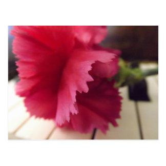 A Soft Pink Melody Postcard
