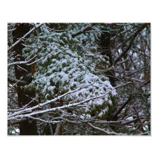 A Somber Scene Of Winter Art Photo