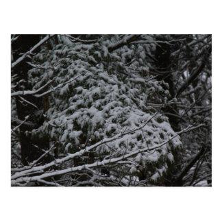 A Somber Scene Of Winter Postcard