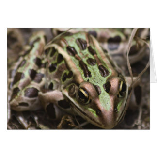 A Southern Leopard Frog Card