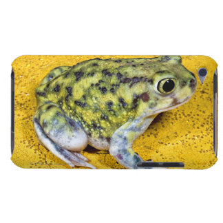A spadefoot toad barely there iPod covers
