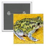 A spadefoot toad pin