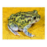 A spadefoot toad post cards