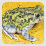 A spadefoot toad square stickers