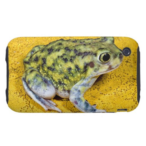 A spadefoot toad tough iPhone 3 case
