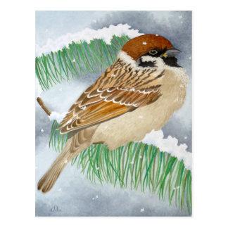 A Sparrow in winter Postcard
