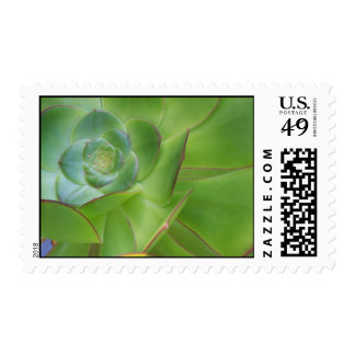 A Special Succulent Stamp