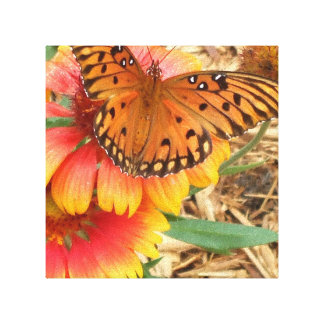 A Spectacular Butterfly on my Gaillardia Pulchella Gallery Wrapped Canvas
