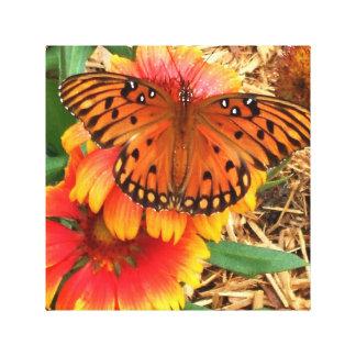 A Spectacular Butterfly on my Gaillardia Pulchella Canvas Print