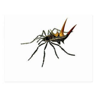 A spined orb-weaving spider postcard