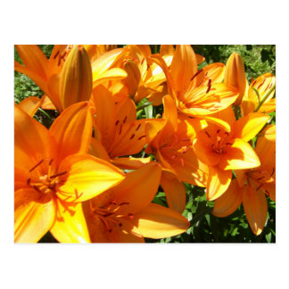 A Splash of Orange Postcard