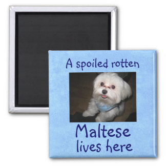 A Spoiled Rotten Pet Lives Here Magnet-Boy Magnet