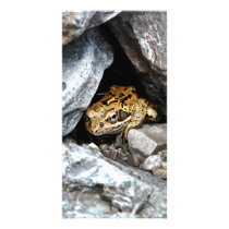A spotted Frog hides among the rocks in a yard Card