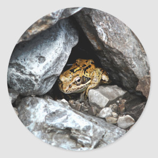 A spotted Frog hides among the rocks in a yard Classic Round Sticker