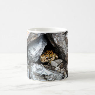 A spotted Frog hides among the rocks in a yard Coffee Mug