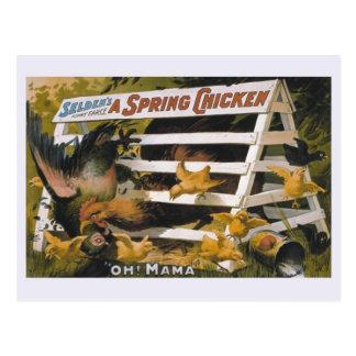 A Spring Chicken, Selden's funny farce Postcard