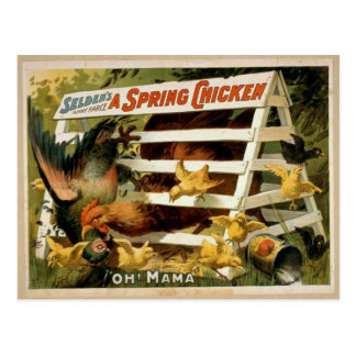'A Spring Chicken' vintage theatrical poster, 1898 Postcard
