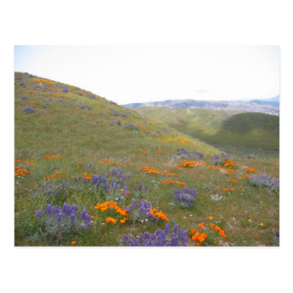 A Spring Lndscp Postcard