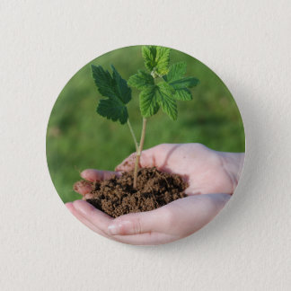 A sprout on a hand button