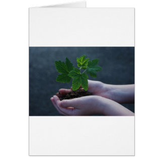 A sprout on a hand card