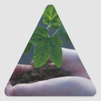 A sprout on a hand triangle sticker