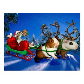 A Squeeky Christmas! Postcard