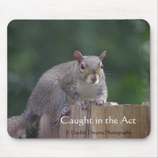 A Squirrel Caught in the Act Mouse Pad