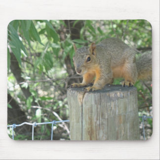 A Squirrel Mousepad