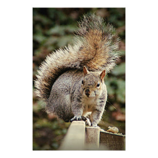 A Squirrels Tail Stationery