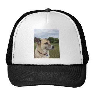 A staring German Shepard Hat