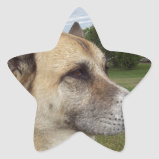 A staring German Shepard Star Sticker
