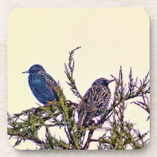 A Starling Bird Couple Beverage Coaster