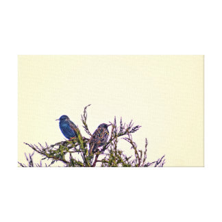 A Starling Bird Couple Gallery Wrapped Canvas