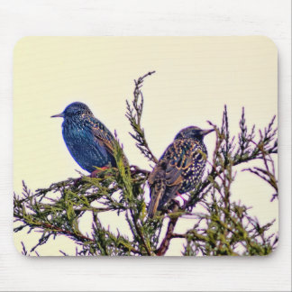 A Starling Bird Couple Mouse Pad
