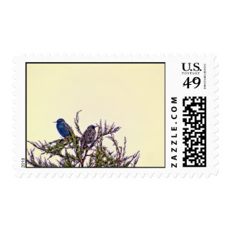 A Starling Bird Couple Postage Stamp