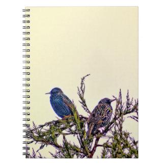 A Starling Bird Couple Spiral Notebook