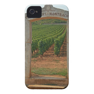 A stone portico to the vineyard blackberry cases