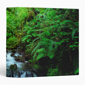 A stream in an old-growth forest 3 ring binder