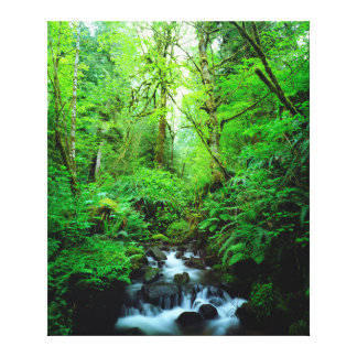 A stream in an old-growth forest canvas print