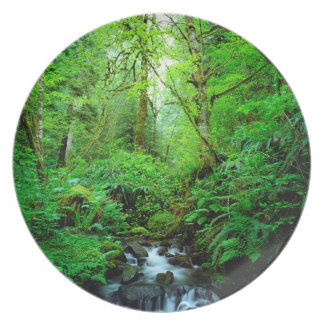 A stream in an old-growth forest dinner plate