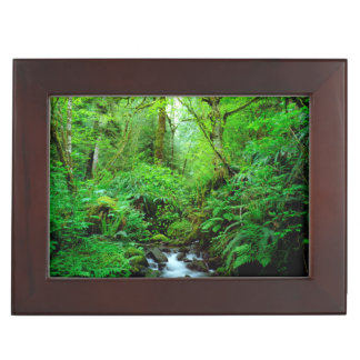 A stream in an old-growth forest memory box