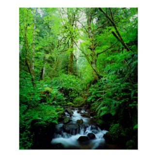 A stream in an old-growth forest print