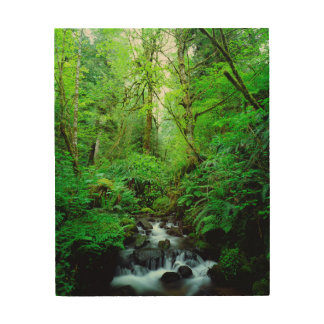 A stream in an old-growth forest wood canvas