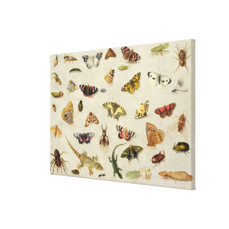 A Study of insects Stretched Canvas Prints