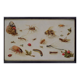 A Study of Insects Poster