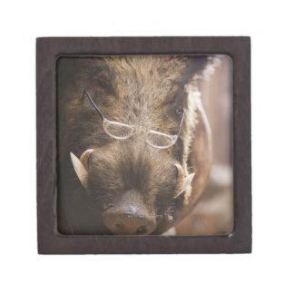 a stuffed wild boar wearing glasses outside a keepsake box
