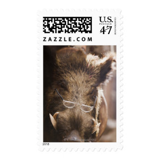 a stuffed wild boar wearing glasses outside a postage