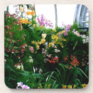 A stunning display of exotic orchids growing beverage coaster